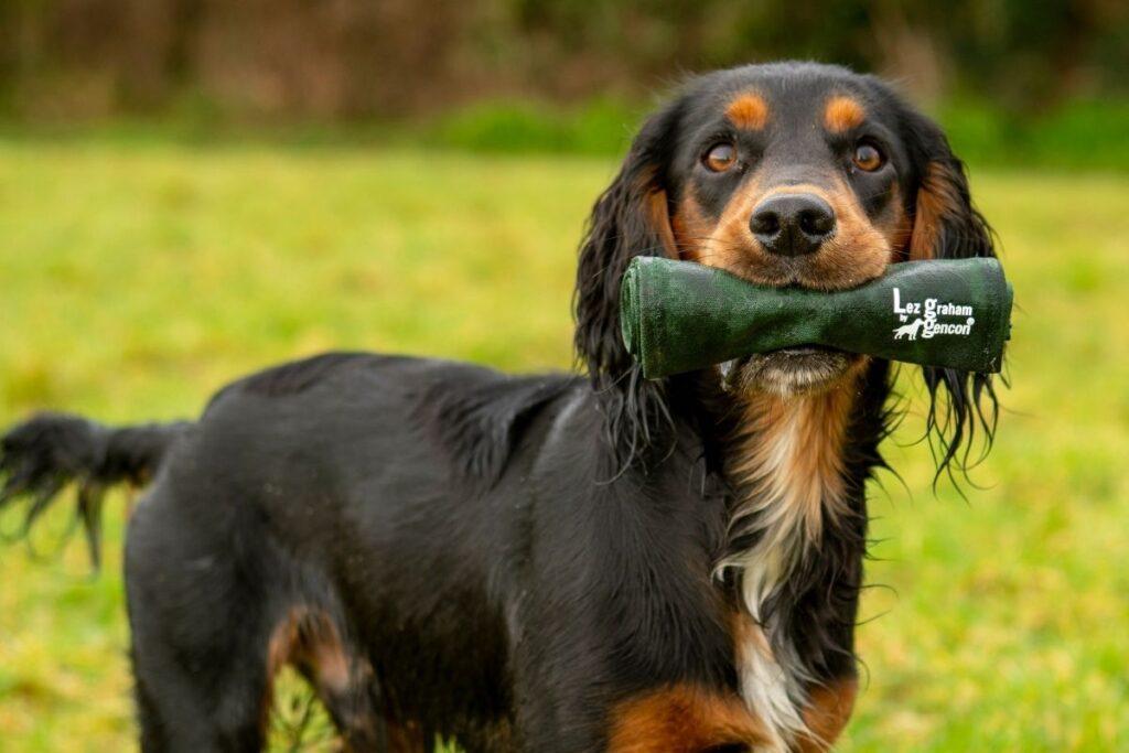 Dog Retrieval Tools